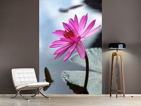 Wandbespannung Grosse Lotus in Pink